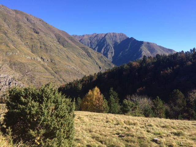 Pyreneeen1